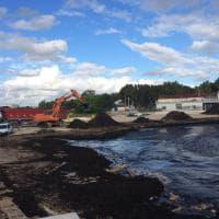 Bari, montagne di alghe: smaltite 380 tonnellate