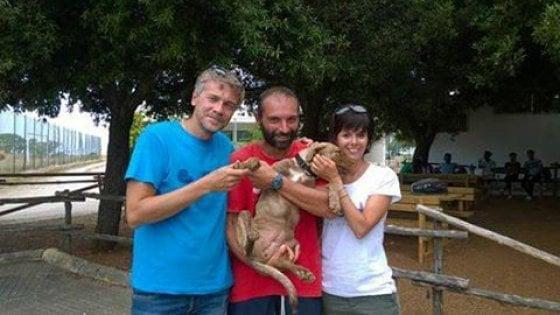 Torre Guaceto, abbandonano un cane nella riserva: una coppia di turisti lo adotta
