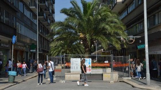 Bari, avviato il cantiere per rifare via Sparano: recintata la prima delle palme da espiantare