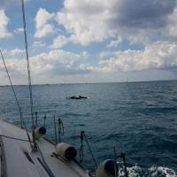 'Bari in vela', festa in mare con i delfini: la barca del Politecnico conquista