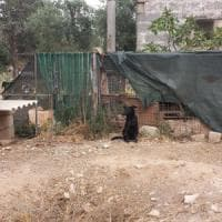 Lecce, blitz nel canile lager: legati agli alberi e malnutriti. Denunciato