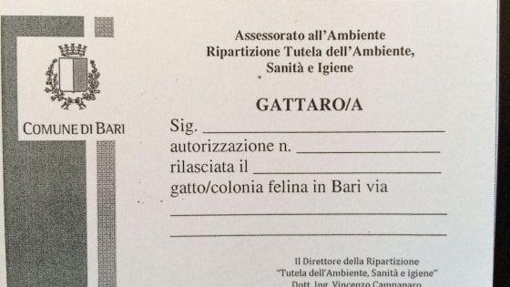 Bari, boom dei tesserini per i gattari: dal Comune un pass per autorizzare le cure ai mici
