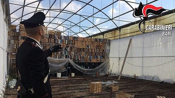 Cittadini segnalano 'strani' odori al cimitero, carabinieri scoprono marijuana in un capannone