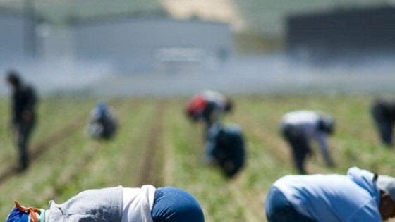 Il ddl contro il caporalato è legge: sei anni a chi sfrutta i lavoratori