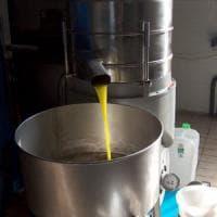 Olio extravergine, 15mila litri sequestrati nei frantoi di Bari e Brindisi: