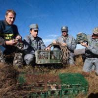 Puglia, la caccia abusiva in mano ai clan: la criminalità controlla anche