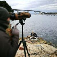 """Puglia, il freddo fa scappare gli uccelli migratori: """"Lasciate cibo sui davanzali per..."""