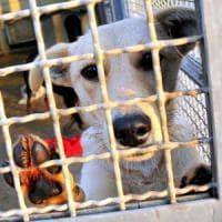 Statte (Taranto), sgravi fiscali a chi adotta un cane: