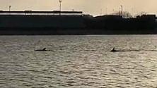 Brindisi, show nel porto con la danza dei delfini
