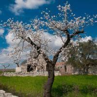 Puglia in fiore: i nostri lettori fotografano la primavera