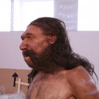 L'Uomo di Altamura in esposizione: apre la rete museale per il Neanderthal