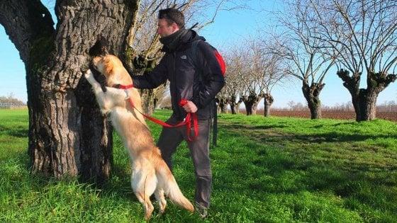 """Gargano, il cane Teseo a caccia dei coleotteri protetti dalla Ue: """"Fondamentali per l'ecosistema"""""""