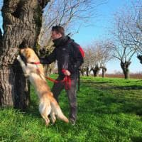 """Gargano, il cane Teseo a caccia dei coleotteri protetti dalla Ue: """"Fondamentali per..."""