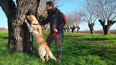 """Gargano, il cane Teseo a caccia di coleotteri protetti dall'Ue: """"Decisivi per l'ecosistema"""""""
