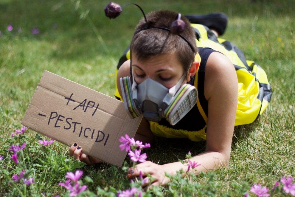 Greenpeace, a Bari le volontarie si travestono da api