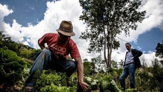 In Puglia nasce la Banca della Terra: censimento dei terreni incolti da destinare ai giovani agricoltori