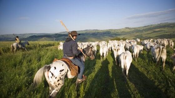 """Transumanza, il rito si rinnova tra Puglia e Molise: """"Le notti a cavallo con la luna piena sono magiche"""""""