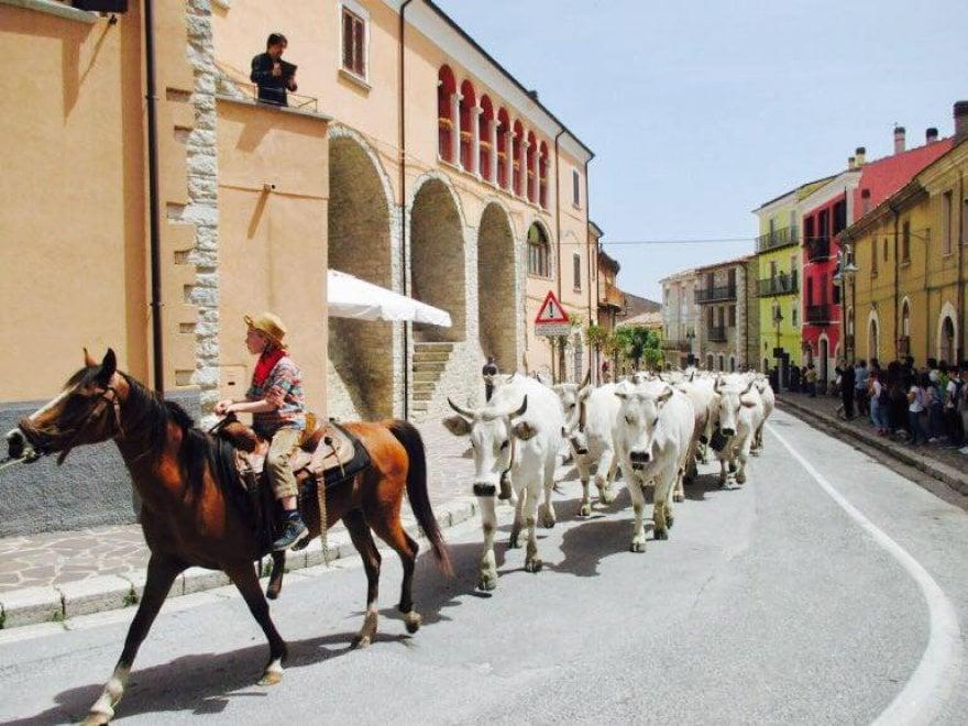 Transumanza, la magia del rito dalla Puglia al Molise