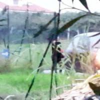 Cerignola, picchiano una prostituta per imporle il pizzo: tre ragazze finiscono in carcere