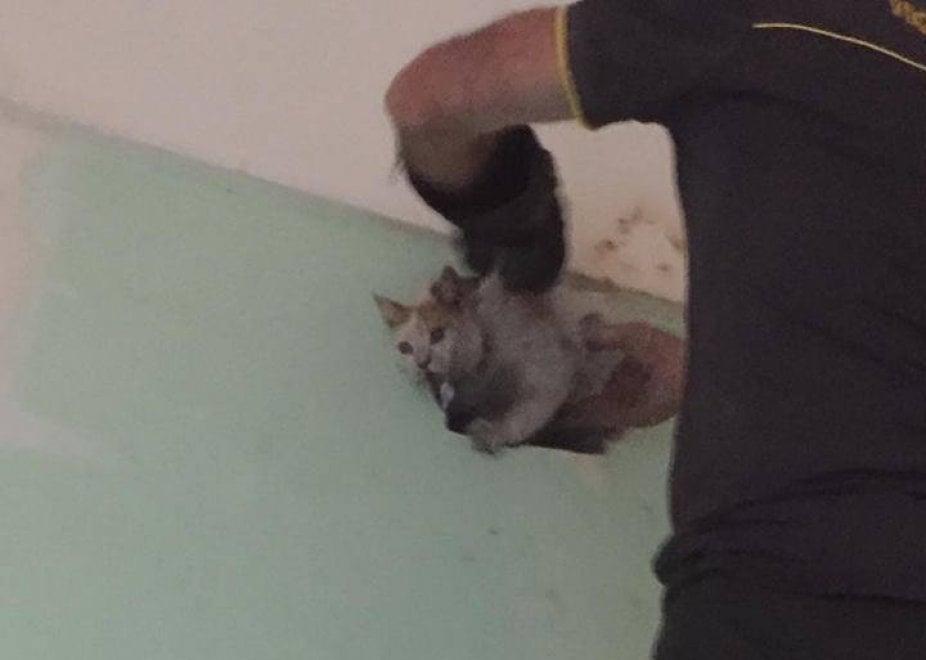 Brindisi, il salvataggio della gatta nella canna fumaria