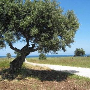 Puglia, le '5 vele' all'Alto Salento e al comprensorio degli ulivi secolari. La novità è Bisceglie