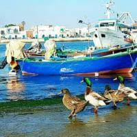 Bari, il quartiere Santo Spirito adotta la colonia di anatre