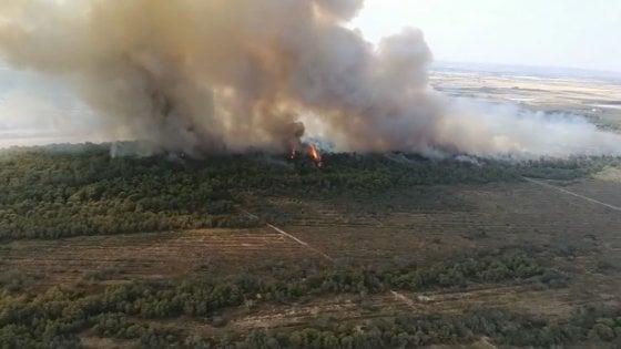 Incendio a Metaponto, 600 evacuati dai campeggi: le fiamme divorano la pineta