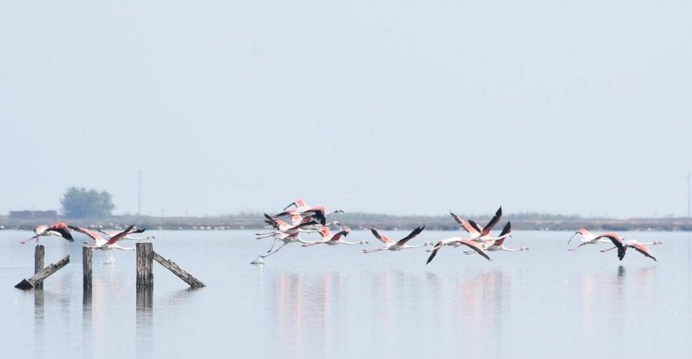 Margherita di Savoia, il regno degli uccelli migratori