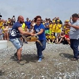 Taranto, nascono sulla spiaggia 16 tartarughine