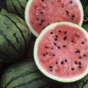 Caldo, in Puglia la strage di angurie e meloni: giù i prezzi, i raccolti vengono distrutti