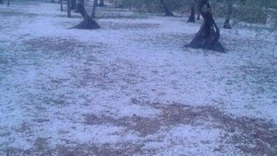 Bari, temporale disastroso: mandorli e olivi 'potati' da chicchi di grandine
