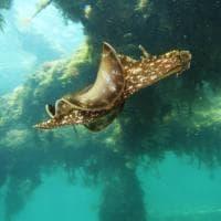 Taranto, il meraviglioso mondo sotto il Mar Piccolo