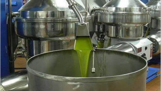 L'annata orribile dell'olio: in Puglia calo del 50 per cento ma qualità ottima