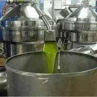 L'annata orribile dell'olio: in Puglia calo del 50 per cento ma qualità
