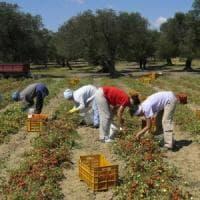 Salento, 47enne stroncato dal caldo nei campi: datore di lavoro e caporale verso il...