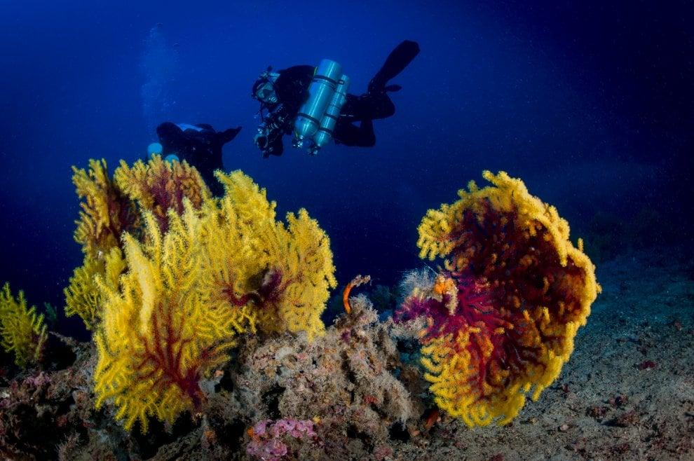 Il Salento è magico anche sott'acqua: ecco i suoi tesori