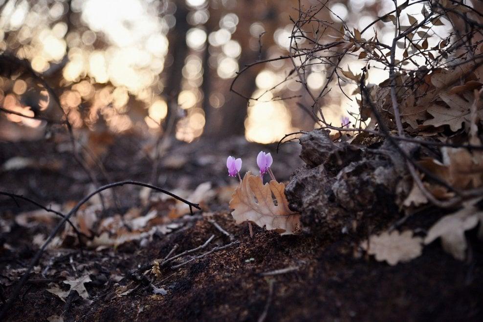 Il bosco dopo il rogo, a Gravina distruzione e rinascita