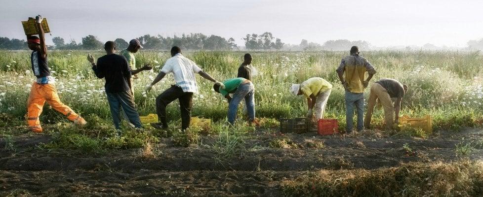 'Questo prodotto è etico': così le aziende evitano i controlli e vendono i pomodori dei caporali