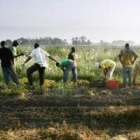 'Questo prodotto è etico': così le aziende evitano i controlli e vendono i pomodori dei...