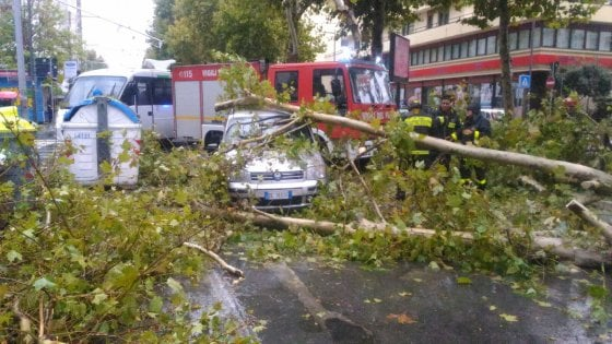 Vento forte su Bari, auto centrata in pieno da un albero: illesi la conducente e i due bambini a bordo