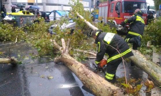 Viale della Repubblica, albero precipita su auto in transito