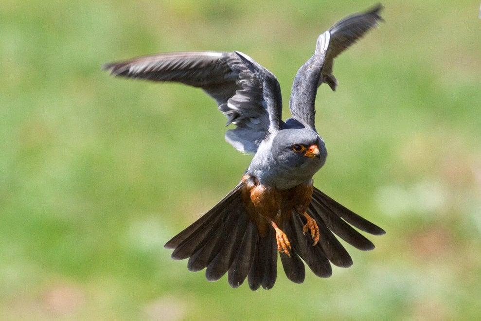 Birdwatching in Salento: la natura dà spettacolo