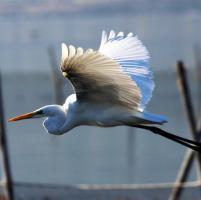 Birdwatching in Puglia: ecco le meraviglie di Varano