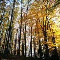 Foresta umbra, ecco le faggete Patrimonio dell'umanità