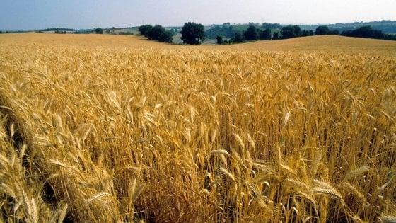 """Il governo mette in vendita 76 terreni in Puglia. Coldiretti: """"Un'opportunità per i giovani"""""""