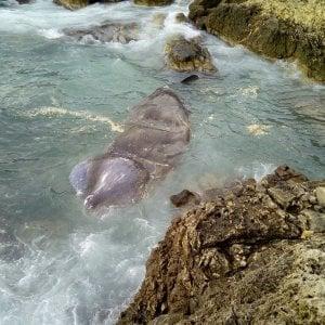Salento, balena di dieci metri spiaggiata lungo la costa di Porto Selvaggio