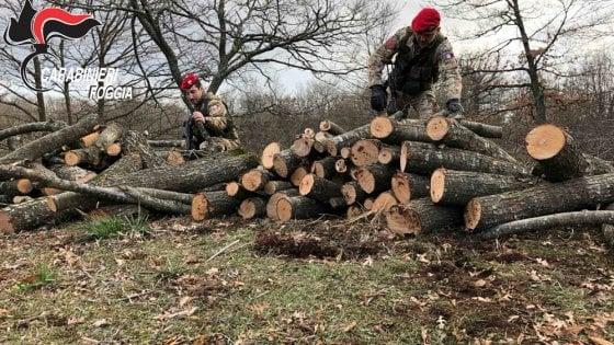 Strage di querce nel Parco del Gargano, abbattuti 400 alberi: 3 in manette