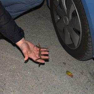 Bari, in fuga da Cerignola con ariete e chiodi a tre punte: arrestati due pregiudicati