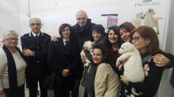 Bitonto, Alessandra Amoroso adotta un cucciolo di due mesi dal canile comunale