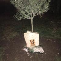 Una lapide per Ringo, il cane simbolo di Bisceglie